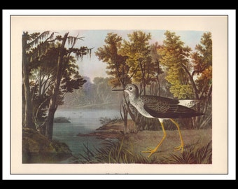 Vintage Book Print 1950's Audubon Bird Of America : Lesser Yellow Legs Single Page Wall Art Decor Print
