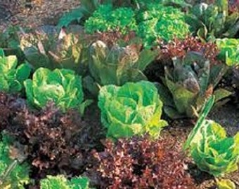 Free SHIPPING IN CANADA Organic Heirloom Lettuce Survival Wholesale Garden Kit 12pks over 1125+ seeds All the varieties you need in a garden