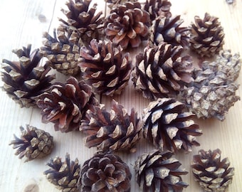 Pine cones, 20 pcs, natural supplies, pinecones for craft