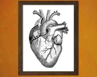 Get 1 Free Print *_* Anatomy Poster - Scientific Illustration Medical Decor Human Anatomical Wall Decor Home Design Bones Medicine Organs
