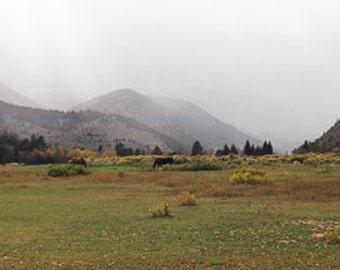 Panorama: Poudre Canyon Horses in Rain. Rocky Mountains, Colorado.