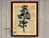 Roses poster, wild roses print, botanical old illustration, antique print, rustic vintage home decor, dictionary page 0127