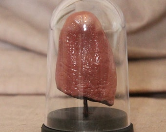 Tongue - Displayed in Dome