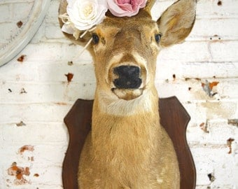 Painted Cottage Prairie Real Taxidermy Deer PR134