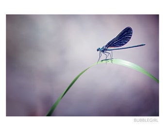 Nature Photography PRINT, Dragonfly, Wall Art