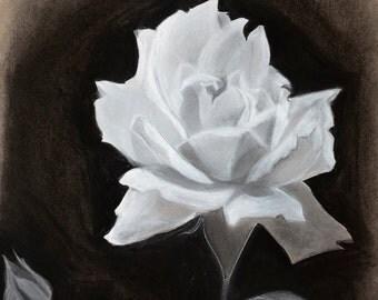 Chalk & Charcoal White Rose Drawing 9x12 Fine Art Print Wall Art Poster