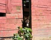 Donkey Munchies