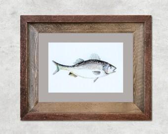 "Bass Fish Original Watercolor Painting 5x7"""