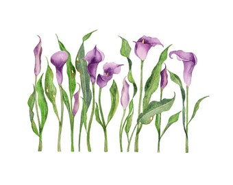 Purple Calla Lily II watercolor print