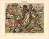"""1897 Bird Prints, 2 Antique Prints, """"Stubenvögel"""", Lithograph, German, Vintage Illustration, Caged Birds"""