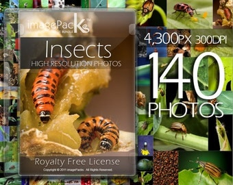 Insects Bugs Stock Photos Pack / Royalty Free Image bundle