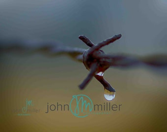 Barbed Wire, Fence, Macro
