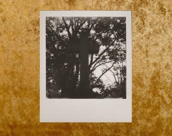 Original Black & White POLAROID 600 Photo - Grave - Cemetery - Graveyard - Cross