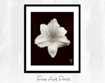 "Sepia Art Print, Flower Art Print, Sepia Picture, Fine Art Print, ""Sepia Lily"""