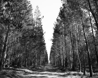 Lost in the forest travel photography print, Australian photography, forest photo, 8x12 print, black and white print