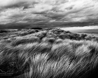 Fine Art Photograph, Black and White Seascape - Landscape - Title: Ammophila Holds the Coast Together