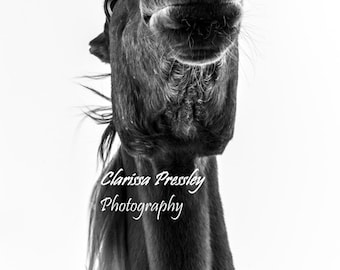 Black and white, Horse photography, Black and white horse photography, Wall art, Fine art, Horse art, Photography