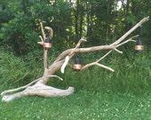 Super unique driftwood pa...