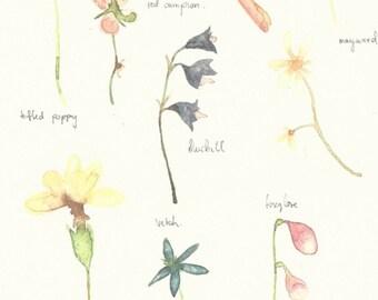 wild flowers art print A4