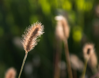 Grass. A Brush in the Grass. Photographic print on lustre paper in a cream board mount. Wall art. Home decor.