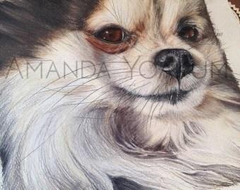 "8x8"" Custom Animal Portrait by Amanda Yoakum"