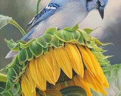 Blue jay bird yellow sunflower garden wall art canvas print by Leslie Macon