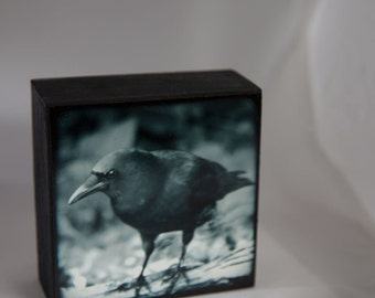 Cyan Blue Black Crow Photograph--Black Crow Watching Cyan--Fine Art on Wood Panel