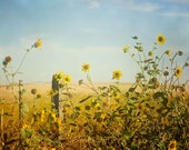 Sunflower Photography Picture, Sunflower Kitchen Decor, Sunflower Picture, Sunflower Wall Art