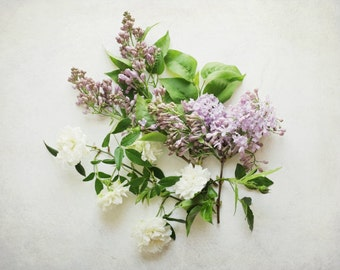 Botanical still life lilac flowers white roses pastel white floral art print nature photography 'Lilac and Rose'
