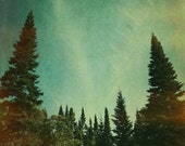 Large art print Tree photography . nature photography . evergreens . northwoods . woodland art print . forest . blue . green . oversized art