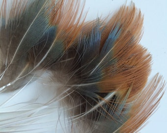 PHEASANT FEATHERS ,Stripped, natural  / 750 - S