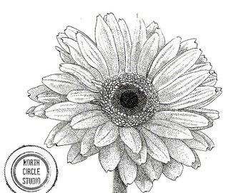 Melissa's Gerbera Daisy original pen and ink illustration print
