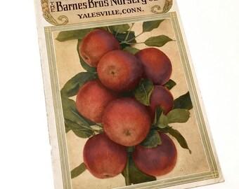 Apples vintage catalog cover illustration . paper ephemera . Barnes Bros Nursery Yalesville Connecticut . fall red apples . wall decor farm