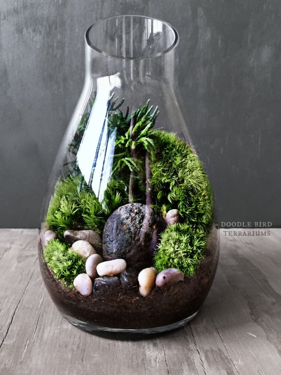 ensemble de carafe mousse terrarium cadeau jardin miniature. Black Bedroom Furniture Sets. Home Design Ideas