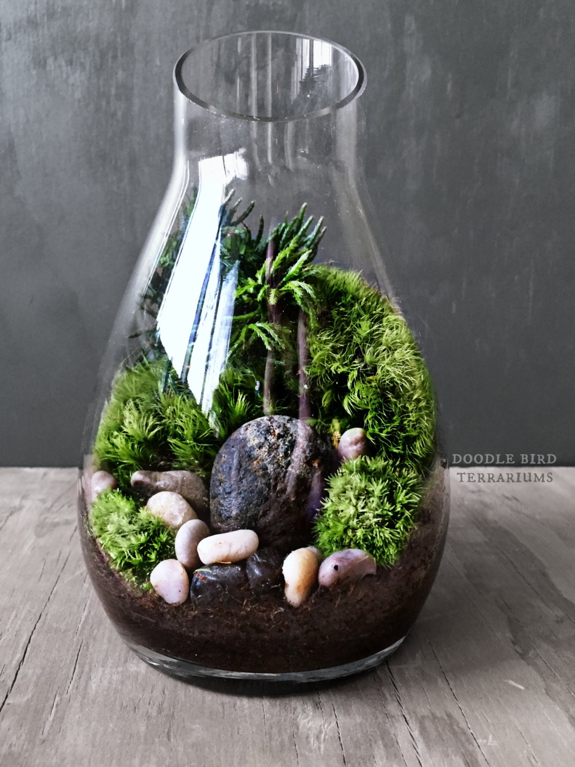 carafe moss terrarium gift set live houseplants office decor. Black Bedroom Furniture Sets. Home Design Ideas