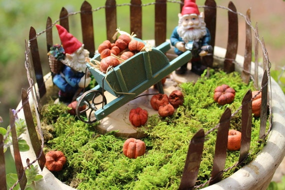 8 Fairy Garden pumpkins-Miniature pumpkin-puka pods-Small orange pumpkin-terrarium pumpkin