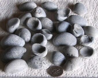 27 Fossils Art Mosaic Craft Supplies (1704)