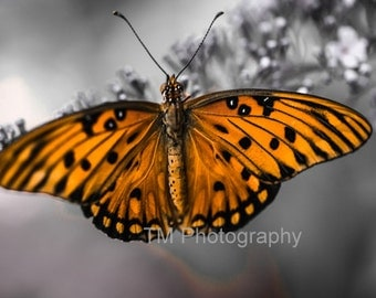 Monarch - Colorful - Bright Butterfly - Butterfly - Selective Color - Monarch Zen