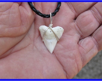 Bull Shark tooth on Leather necklace