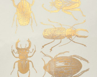 Large Scarab Beetles Ceramic Decals, Glass Decals or Enamel Decals