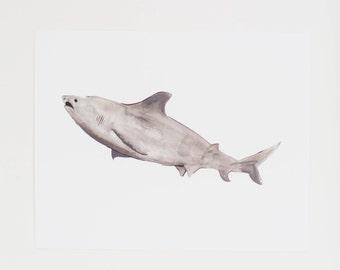 SALE - Watercolor Art Print - Grey Shark Illustration -  Print  - 8 x 10
