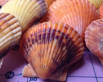 Orange Pectin Shell