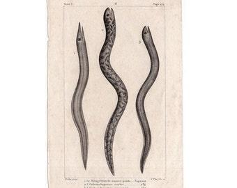 1817 EELS FISH print original antique sea life ocean engraving