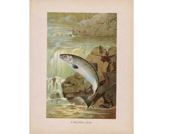 1910 SALMON FISHING original antique wildlife fish lithograph