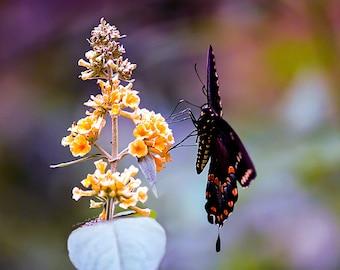 End of Summer- fine art photography- bokeh photography- butterfly photography- insect photography- nature photography- home decor- wall art