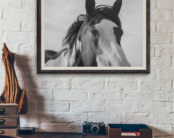 Paint Horse Photograph in Black and White, Close Up Horse Photo, Large Size Available