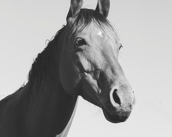 Black and White Modern Horse Photograph in Vertical Orientation