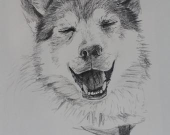 FRAMED Original Graphite Drawing Smiling Alaskan Husky Dog Sled Dog colorado
