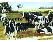 Holstein Black White Cows Print Watercolor Lafayette Ragsdale