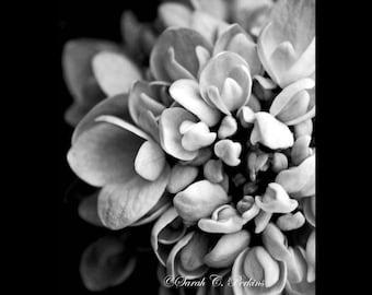 B&W Living Room Wall Art Hydrangea Fine Art Photography Print Floral Macro Gray Petals Contrast 8x10/8x12/11x14/11x16/16x20/16x24/20x30